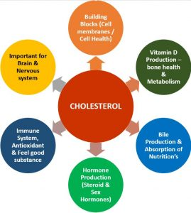 cholesterol can help us stay healthy